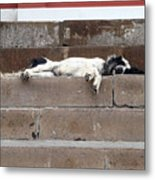 Street Dog Sleeping On Steps Metal Print
