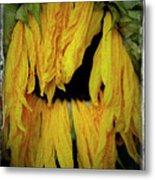 Sunflower 1134 Metal Print