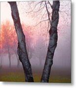 Sunrise Trees Fog Metal Print