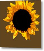Sunflower Stretching On Brown Metal Print