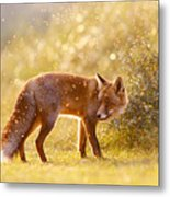 The Fox And The Fairy Dust Metal Print