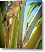 The Gila Woodpecker Metal Print