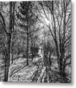 The Peaceful Forest  Metal Print