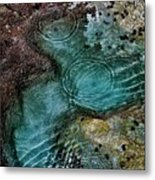 Tide Pool Metal Print