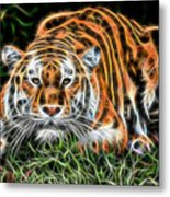 Tiger Collection Metal Print