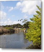 Turkey Creek In Palm Bay Florida Metal Print