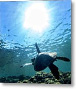 Turtles View Metal Print