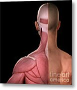 Upper Body Muscles Metal Print