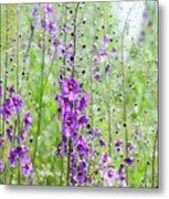 Verbascum Phoeniceum In The Meadow Metal Print