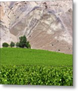 Vines Contrasting With Chiles Atacama Desert Metal Print