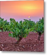 Vineyards At Pink Sunset Metal Print