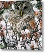 What A Hoot Metal Print