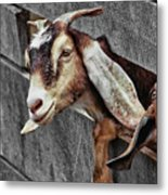 What's Going On? Metal Print