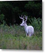 White Buck Metal Print