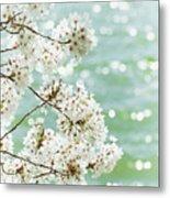 White Cherry Blossoms Trees Metal Print