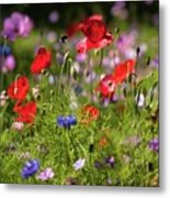 Wild Flowers And Red Poppies Metal Print