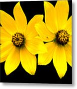 2 Yellow Daisies Metal Print