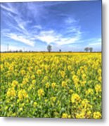 Yellow Fields Of Summer Metal Print