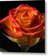 Yellow Rose With Red Tips Metal Print