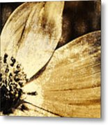 Yesterday's Flower Metal Print