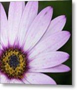 Closeup Of A Colourful Flower Metal Print