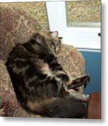 Maine Coon Cat Metal Print