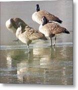 2004-geese On Ice Metal Print