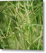 2008 Grasshopper In Green 'can You See Me...' Metal Print