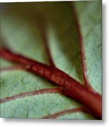 2010 Hydrangea Leaf Close Up 1 Metal Print