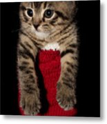 2010 Stocking Cat 2 Metal Print