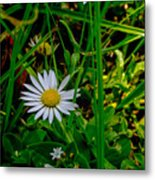 2015 08 23 01 A Flower 1106 Metal Print