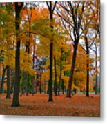 2015 Fall Colors - Washington Crossing State Park-1 Metal Print