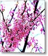 2016-03-18 Redbud Tree In Bloom Metal Print