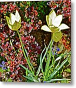 2016 Early May Side Garden Delight Metal Print