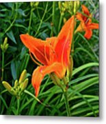 2016 July Garden Daylily Summer Afternoon Metal Print