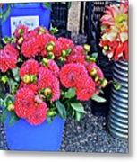 2016 Monona Farmer's Market Blue Bucket Of Dahlias Metal Print
