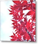 2017 Red Maple 3 Metal Print
