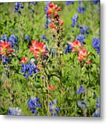201703300-068 Indian Paintbrush Blossom 2x3 Metal Print