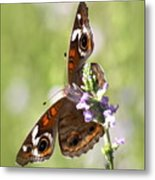 2065 - Butterfly Metal Print