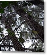 Australia - Spider Web High In The Tree Metal Print