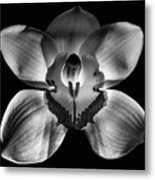 218 Fixed Background Metal Print
