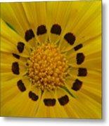 Australia - Yellow Daisy Flower Metal Print