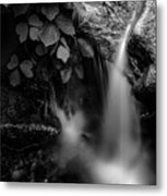 Broad River Flowing Through Wooded Forest Metal Print