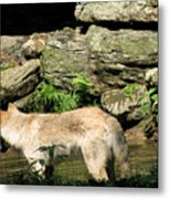 The Wild Wolve Group A Metal Print