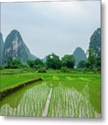 The Beautiful Karst Rural Scenery In Spring Metal Print