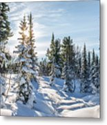 Amazing Landscape With Frozen Snow-covered Trees In Winter Morning  Metal Print
