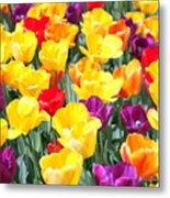 Amsterdam Tulips. Metal Print