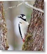 Great Spotted Woodpecker Metal Print