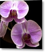 Orchids Kauai Metal Print