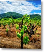 2638- Coffaro Vineyard Metal Print